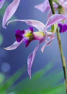 Designs For Garden Flower Beds Beautiful Flowers Garden: Beautiful Orchid Unusual Flowers, Beautiful Flowers Garden, Unusual Plants, Most Beautiful Flowers, Pretty Flowers, Purple Flowers, Orquideas Cymbidium, Orchidaceae, Plantation