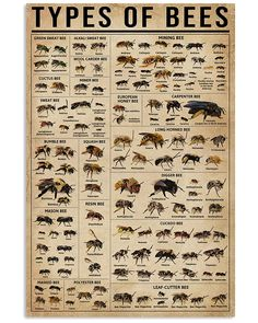 Types Of Bee shirts, apparel, posters are available at Ateefad Outfits Store. Wool Carder Bee, Sweat Bees, Types Of Bees, Carpenter Bee, Print Store, Poster Wall, Canvas Frame, Wall Art Prints