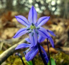 Late March Flowers  April 2, 2016 by New Hampshire Garden Solutions