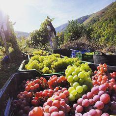Love to tour to this amazing vineyard! #RODwine #rodwineco #vineyardheaven