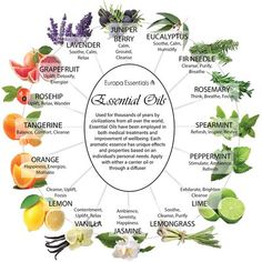 Design Imports Jasmine Essential Oil Color: Black Pepper Scented Oil Diffuser, Scented Oils, Essential Oil Diffuser, Jasmine Essential Oil, Essential Oils Guide, Essential Oil Blends, Magic Herbs, Herbal Magic, Healing Herbs