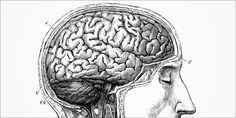 Things Youll Get 1 New Study Confirms Alcohol Destroys The Brain, Not Cannabis