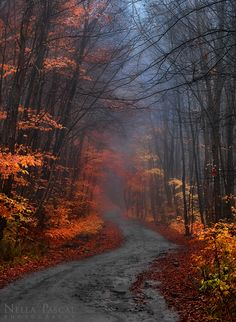 Misty Forest, New York; photo via jordyn. Beautiful World, Beautiful Places, Beautiful Pictures, Misty Forest, Autumn Aesthetic, All Nature, Bushcraft, Belle Photo, Beautiful Landscapes