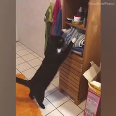 New funny cute cats kittens kitty ideas Funny Cute Cats, Cute Cats And Kittens, Cute Funny Animals, Cute Baby Animals, Cool Cats, Cute Animal Videos, Funny Animal Pictures, Gato Gif, Animal Antics