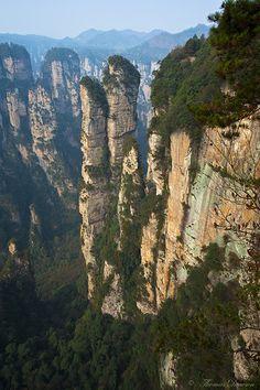 Zhangjiajie National Park in China.  Reaching for the Skies by Thomas J Dawson