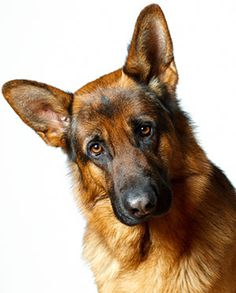 Five Foods You Should Feed Your Dog