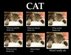 Cats: What People Think I Do vs. What I Really Do - World's largest collection of cat memes and other animals Funny Cat Memes, Funny Cats, Funny Animals, Cute Animals, Baby Animals, Dumb Cats, Cat Jokes, Crazy Cat Lady, Crazy Cats