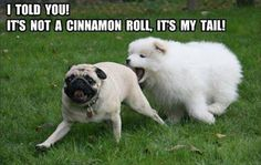 Fun Claw - Funny Cats, Funny Dogs, Funny Animals: Funny Pictures Of Dogs - 23 Pics