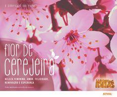 Essas flores são a marca do oriente e estão presentes em diversos tipos de arte por sua beleza e delicadeza.