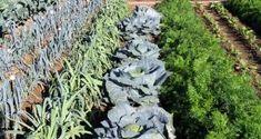 λαχανόκηπος Vegetable Garden, Garden Sculpture, Vegetables, Outdoor Decor, Gardening, Plants, Inspiration, Biblical Inspiration, Home Vegetable Garden