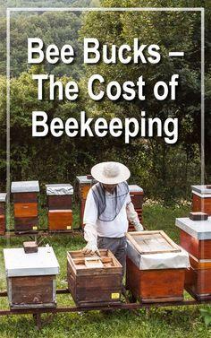 Bee Bucks – The Cost of Honey Beekeeping - Countryside Network Drone Bee, Beekeeping For Beginners, Raising Bees, Bee Boxes, Backyard Beekeeping, Save The Bees, Bees Knees, Queen Bees, Bee Keeping