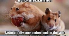 Just Pinned to Hamsters: Growing up with brothers... http://ift.tt/2pIFR32