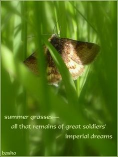 """""""summer grasses - all that is left of great soldiers' imperial dreams"""" - basho"""