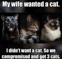 50 Funny Pictures of Cats with Captions