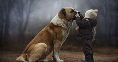 Toddlers and animals talking to each other? Mom's photography captures Stunning moments.