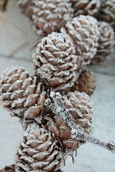 Frosted pine cones smell like Christmas to us. What reminds you of the holidays? #Moments2give