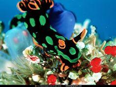 Unterwasserwelt - Desktop Wallpapers: http://wallpapic.de/national-geographic-fotos/unterwasserwelt/wallpaper-38097