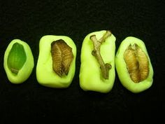 make molds of twigs, leaves, pods, http://pinterest.com/pin/105764291218576636/#ferns, nuts, zippers, rubber gloves, doll parts, rope, jump rings, shells, bike wheels, toy car wheels, denim, fruit skins, gourds, squashes, basketball, soles of shoes, leather, tracing wheel, sugar, plastic canvas, etc