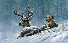 Bedded Down Whitetail Deer by Larry Fanning