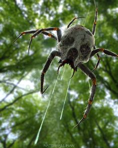"""""""Real life Skulltula? No thanks! Artist imagines what Zelda universe creatures would look like in real life."""" // Oh dear."""