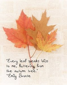 """Every leaf speaks bliss to, fluttering from the autumn tree"" Emily Brönte quotes / cozy autumn evenings"