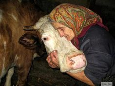 """Old woman with her cow.""""each to his own said the old lady as she kissed the cow"""" a Grandma saying. Amor Animal, Mundo Animal, Beautiful Creatures, Animals Beautiful, Majestic Animals, Farm Animals, Cute Animals, Pretty Animals, All Gods Creatures"""