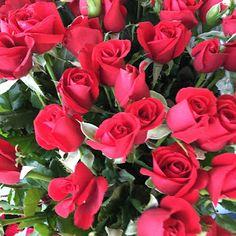 Umut Işığı: Gül Yaprağı Üzerinde... #blog #blogger #blogyazılarım #UmutIşığı #GülYaprağıÜzerinde #SibelBaba #SibelOnayBaba