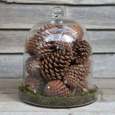 Shop terrain to grow your own garden under glass with our collection of glass terrariums, cloches, and terrarium planting supplies. Glass Bell Jar, The Bell Jar, Glass Domes, Bell Jars, Seasonal Decor, Fall Decor, Holiday Decor, Cloche Decor, Christmas Diy
