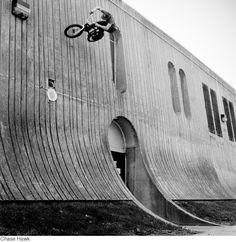 Chase Hawk by Jeff Allen