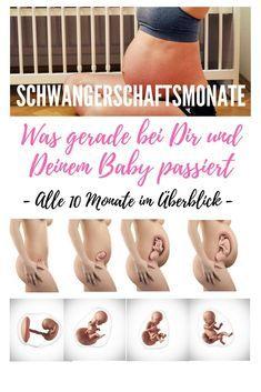 Schwangerschaftsmonate im Überblick - SSM - Was bei der Schwangerschaft bei Dir und Deinem Kind passiert - Die Entwicklung und körperlichen Veränderungen während aller Schwangerschaftswochen SSW und Schwangerschaftsmonate SSM genau b