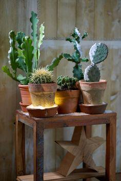 Misschien dat je niet meteen zegt: 'Gezellig, een cactus met kerst'.