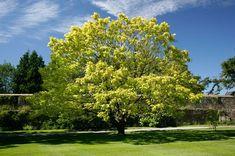 Catalpa Begonia, My Flower, Flowers, Plantar, Terrazzo, Country Life, House Plants, Golf Courses, Patio