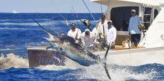 Once lanchas sueltan agujas en el primer día de pesca -...