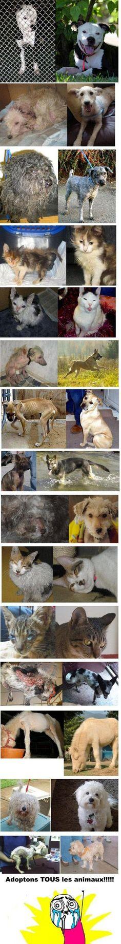 Animaux Avant et Après leur adoption