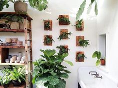 One of our very favorite green corners just goes even cozier. Is there a such thing as too many staghorn ferns?