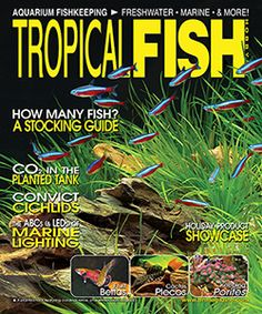 """Wondering whether to add CO2 to your tank, or what lighting to use for your marine aquarium?  Are you new to the hobby and need some advice on your first aquarium?  The new issue of TFH can help you, and it's available now!  Enjoy monthly favorites and interesting features, including Breeding Cactus Plecos and """"Big Little Fish: The Convicts,"""" as well as several more.  http://www.tfhmagazine.com/buy-this-issue.htm"""