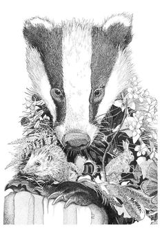 Reproduction pen and ink print of a badger Badger Illustration, Woodland Illustration, Illustration Sketches, Animal Sketches, Animal Drawings, Art Drawings, Badger Tattoo, Natur Tattoos, Woodland Art