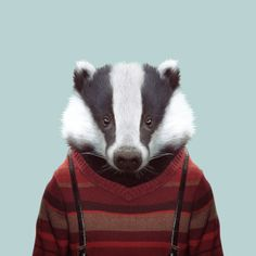 European Badger / Zoo Portraits - Yago PARTAL
