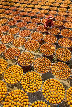 Persimmon (Kaki or Shizi) Fruit Sun Drying 晒柿餅 | by olvwu | 莫方