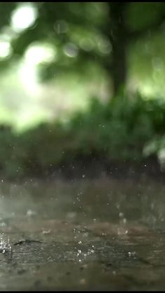 Green Background Video, Photo Background Images Hd, Photo Backgrounds, Rain Photography, Aesthetic Photography Nature, Beautiful Photos Of Nature, Beautiful Nature Wallpaper, Rain Pictures, Flower Pictures