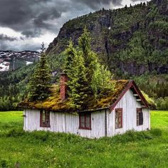 Trees rise from the roof of this abandoned house in Norway.
