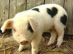 A Valentine pig....I LOVE it!!