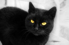♥ Black =^-^= Cat ♥