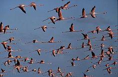 Flamingos in Bonaire. Bonaire salt works info.