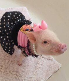Priscilla the Mini Pig | Paw Stars | PawNation