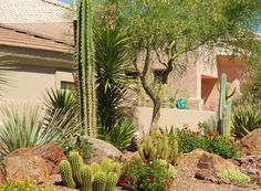 Desert Gardens Nursery - More Landscape Photos