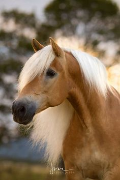 Horses And Dogs, Cute Horses, Horse Love, Animals And Pets, Cute Animals, Most Beautiful Horses, All The Pretty Horses, Animals Beautiful, Equine Photography