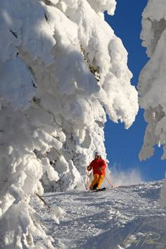 A skier rides through snow-covered trees on Storm Peak at Steamboat Resort in Steamboat Springs, Colorado. - Ella &E. - Google+