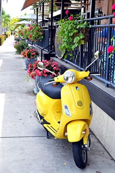 Olde Naples Florida can feel like Europe Naples Florida, Gulf Of Mexico, Beach Town, Sweet Tea, Vespa, Yellow, Day, Europe, Real Estate