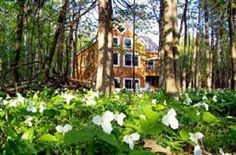 All the Northeastern portion of Michigan including Harbor Springs, Petoskey and Walloon Lake area are overflowing with carpets of Trillium wildflowers.  Breathtaking   (var. wake robin)